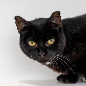 Embeth is a sweet and reserved girl who would make a great low-key companion in a quiet home She wa