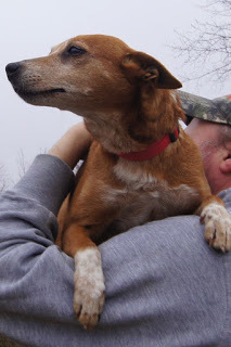 Lisa, an adopted Terrier in Marion, KY
