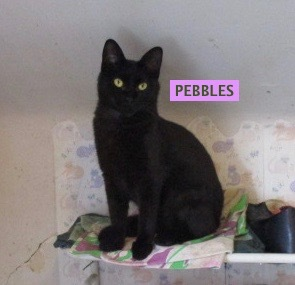 PEBBLES 6