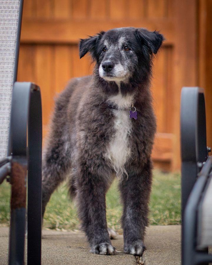 Tina- adopted!! 2