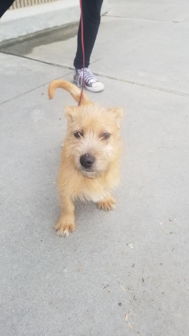 Terrier Puppy, an adopted Terrier Mix in Dallas, GA