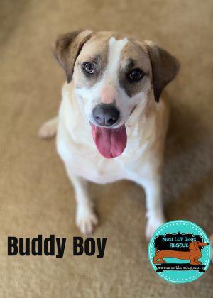 Buddy Boy
