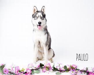 PAULO 3