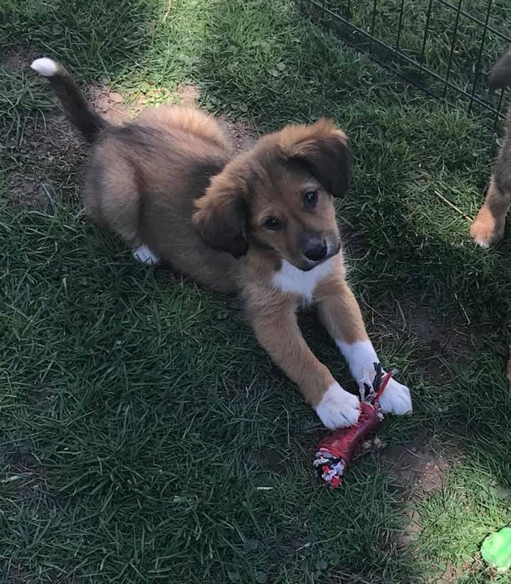 Jorah, an adopted Mixed Breed in Madison, WI
