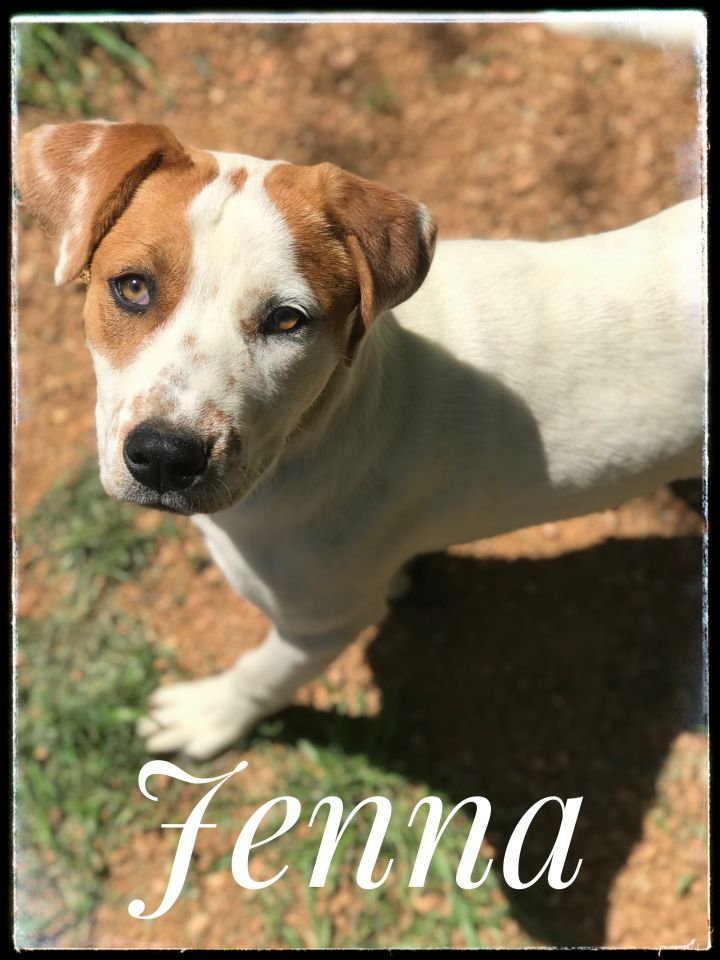 Jenna, an adopted Hound Mix in Dallas, TX