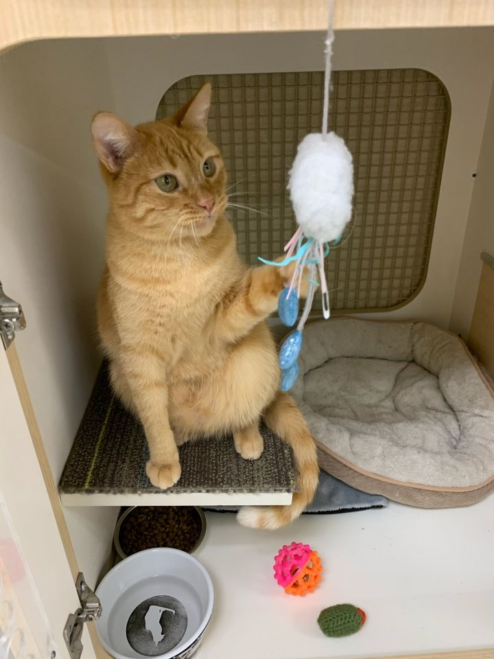 Hutch - I want a home with my brother Starsky! 5