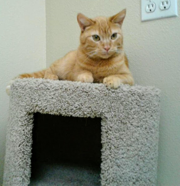 Hutch - I want a home with my brother Starsky! 6