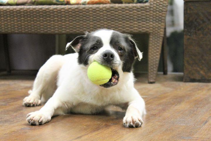 Cora, an adoptable Terrier Mix in Lake Odessa, MI