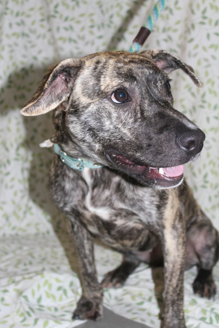 Zena, an adopted Terrier Mix in Statesboro, GA