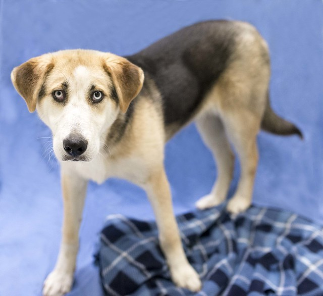Mook, an adoptable Collie Mix in Cincinnati, OH