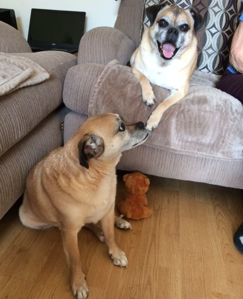 Rocky and Duke 2