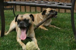 Rocky and Duke