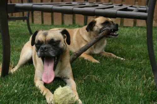 Rocky and Duke 1