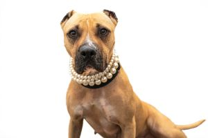 Nala has a heart of gold to match her golden coat Nala is ready and waiting to shower you with