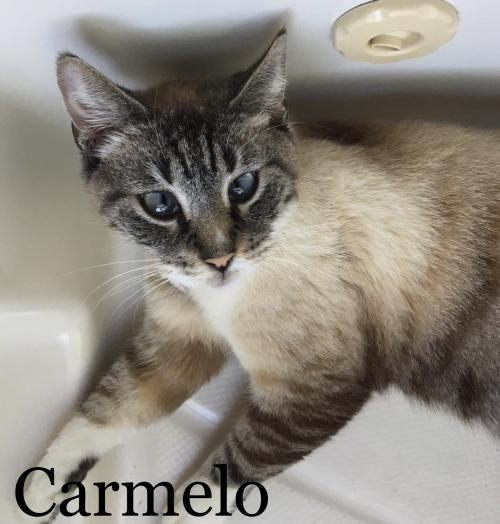 Carmelo 2