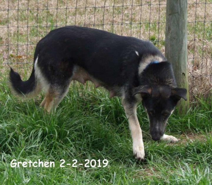 Gretchen 2