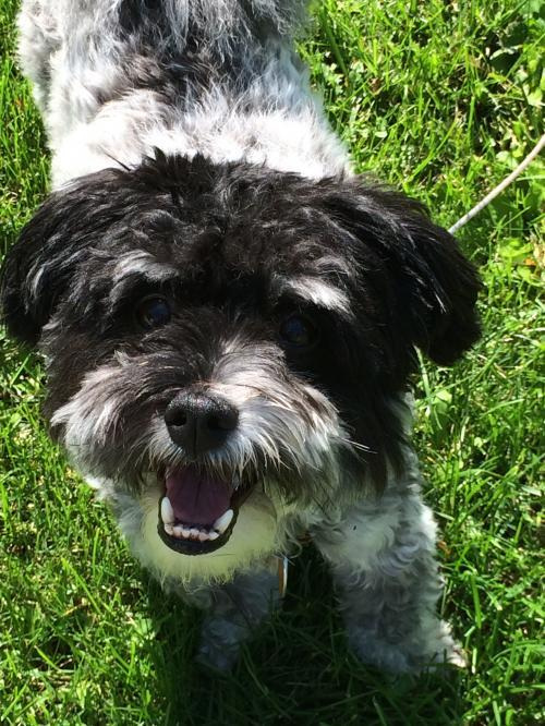 Toby in WI - ADOPTED July 2019 2