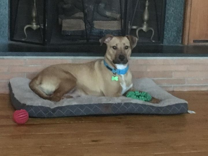 Wilhelmina, an adoptable Mixed Breed in Greenville, NC