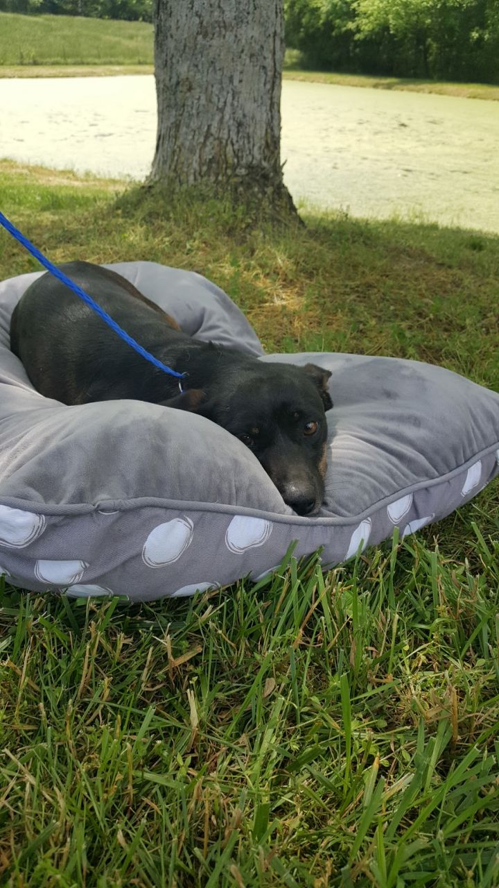 Dolly, an adoptable Dachshund Mix in Calhoun, GA