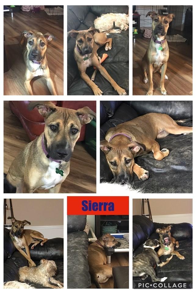 Sierra 1