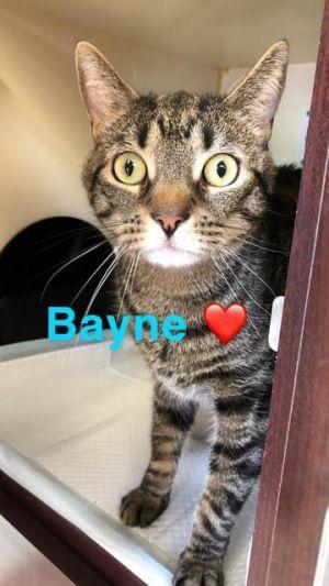 Bayne - at Lebanon PetSmart!
