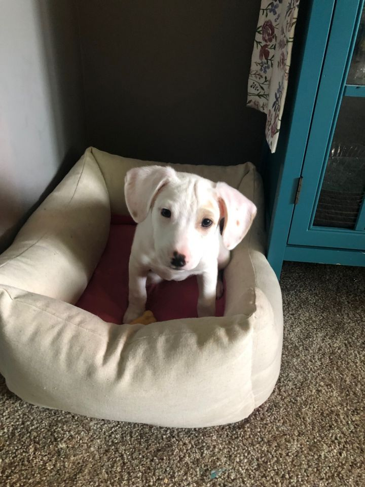Ivory, an adopted Mixed Breed in Madison, WI