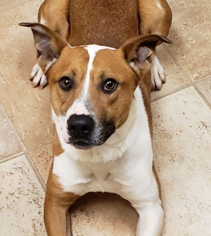Dog for adoption - Jack, a Labrador Retriever Mix in