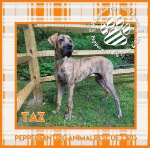 Taz ADOPTION PENDING