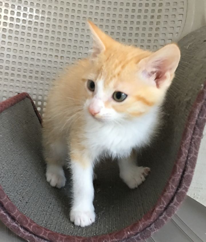 Kittens Available 4