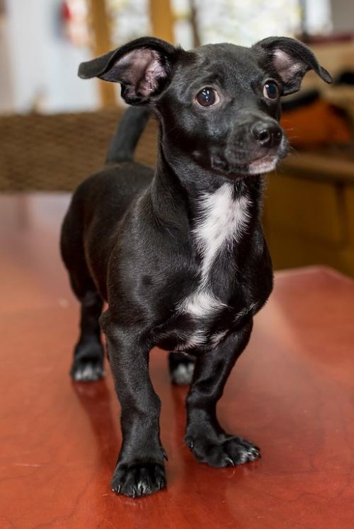 Puppy Zeke