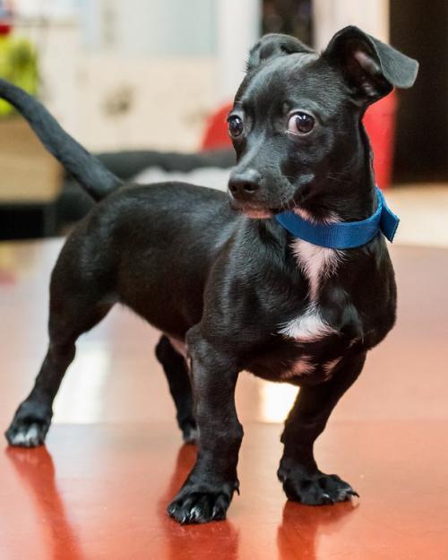 Puppy Zeke 2