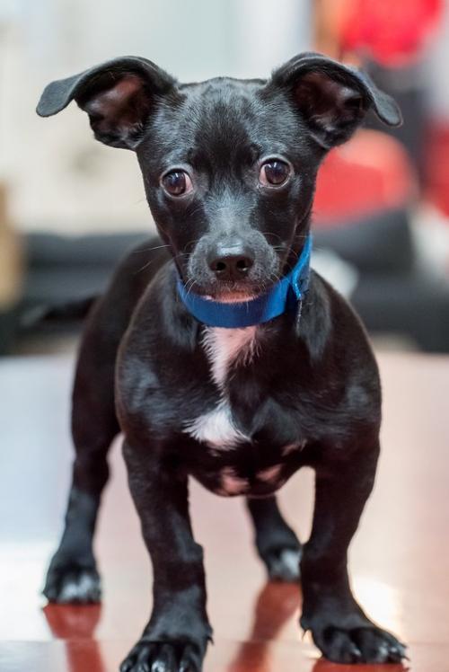 Puppy Zeke 3