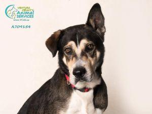 0546eb8b3da3 Dog for adoption - DUKE