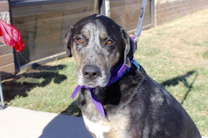 Bart, an adoptable Coonhound Mix in Springfield, MO