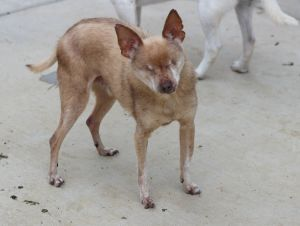 Taz was named after the Tasmanian devil so buyers beware LOL left to die in a Sacramento pound