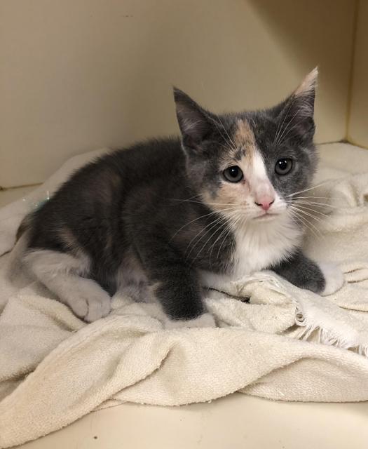Paisley - kitten!