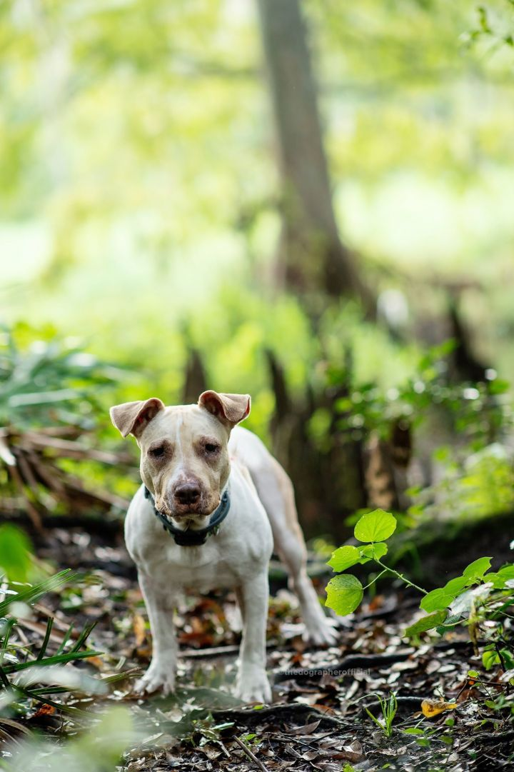 Ria, an adoptable Terrier Mix in Winter Park, FL