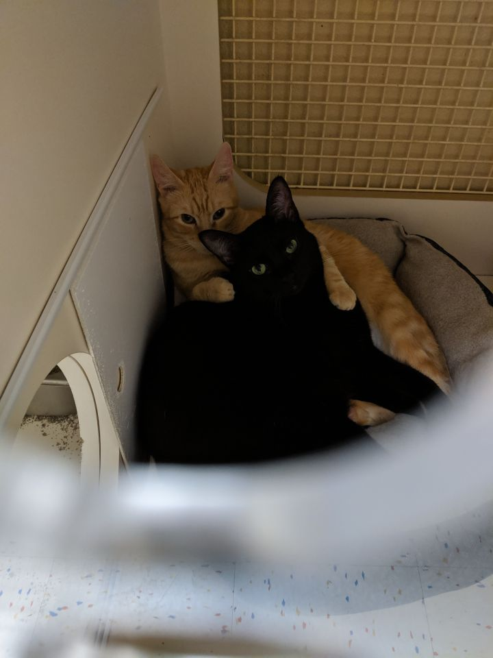 Furrette - My BF Ethan and I would luv your home! 4