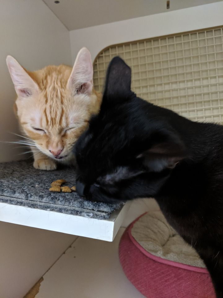 Furrette - My BF Ethan and I would luv your home! 1