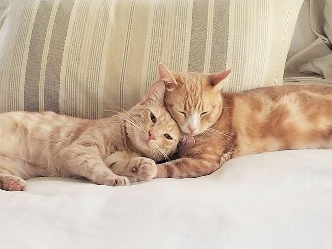 Cinder and Peanut