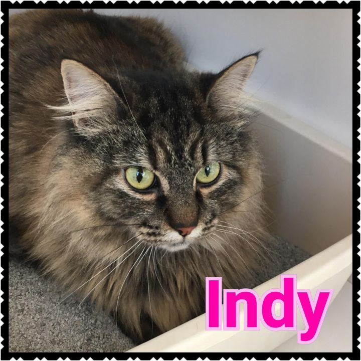 Indy 1