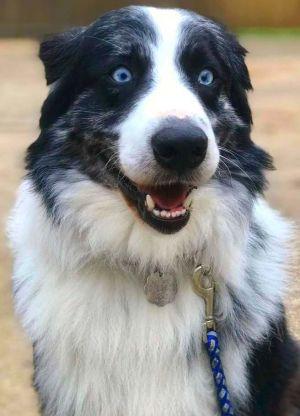 Dog for adoption - [ADOPTION PENDING] APRH #13520 - Reyes, an