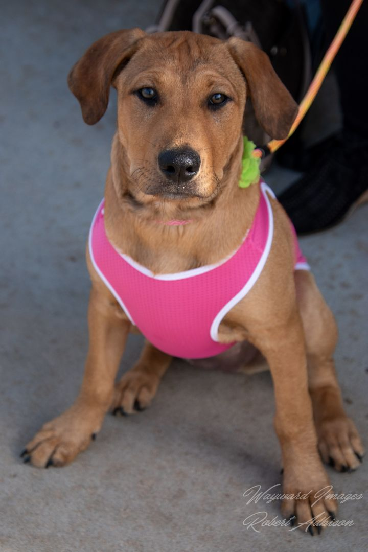 Ouiser, an adoptable Terrier Mix in Springfield, MO