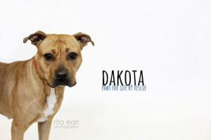 This is Dakota She is a beautiful girl who is looking for a very experienced owner where theres n