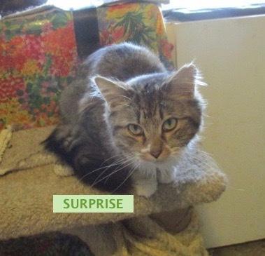 SURPRISE 1