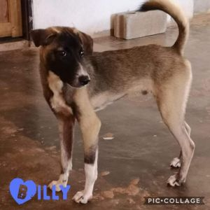 Billy - from Thailand