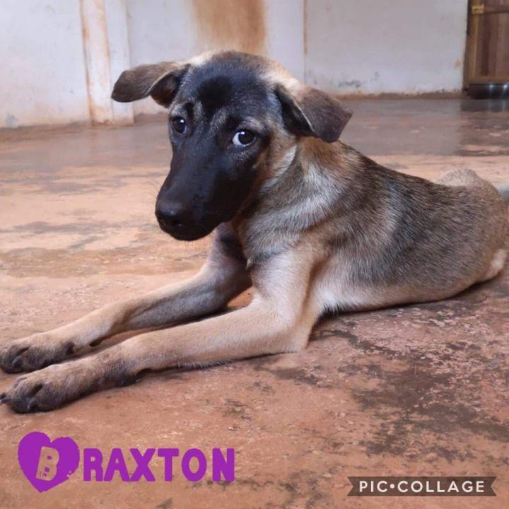 Braxton - from Thailand 1