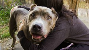 ALL TRAINING AND EXPENSES PAID Hello My name is Willow Im a big gal who is full of love I