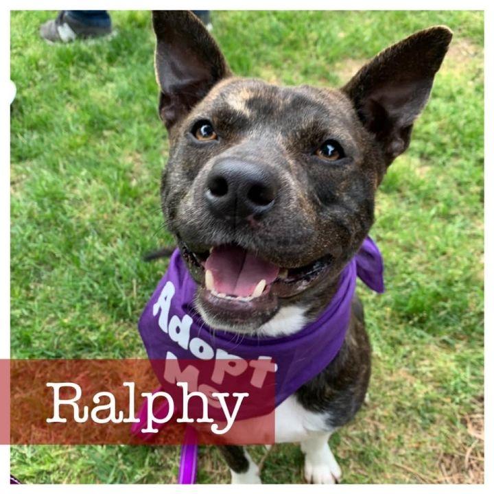 Ralphy 2