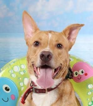 Dog for adoption - Dublin, a Labrador Retriever Mix in